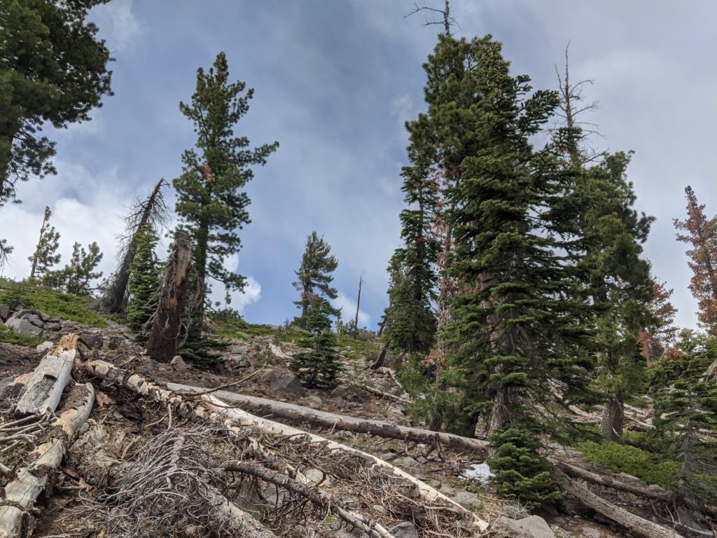 Journal: Sunday, June 7, 2020 // Partial Castle Peak Loop 104