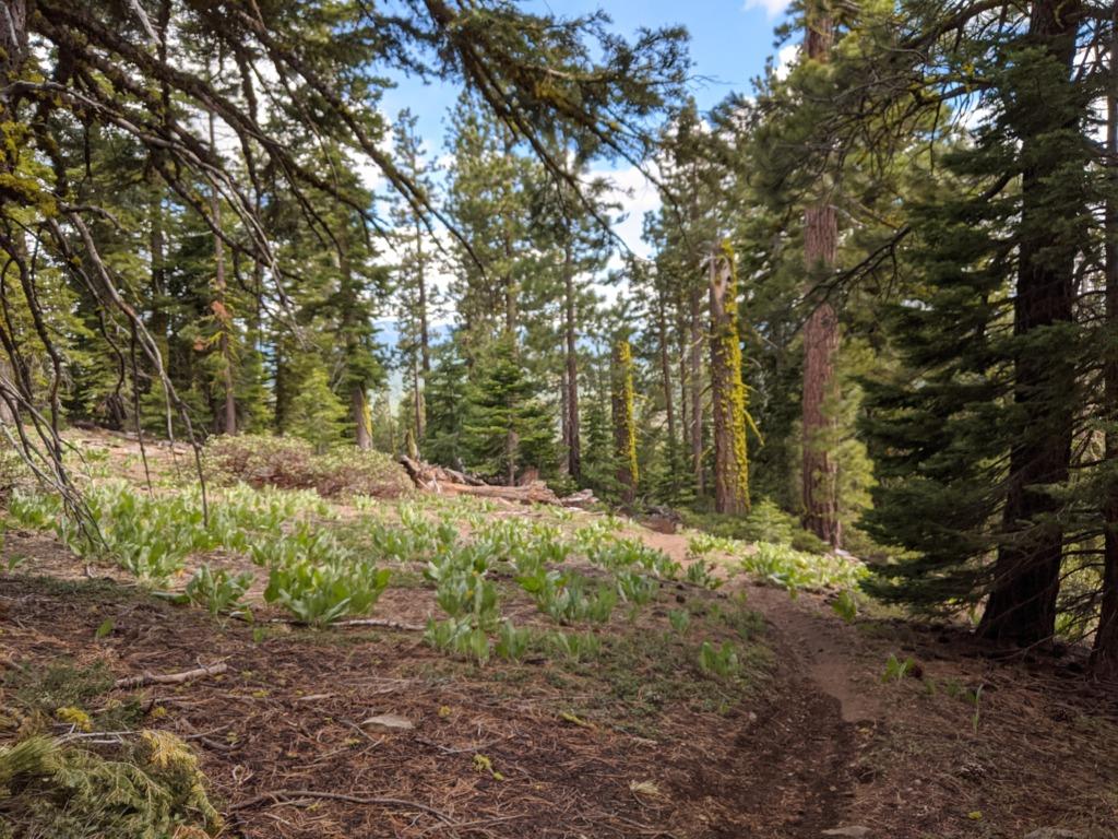 Journal: Sunday, June 7, 2020 // Partial Castle Peak Loop 116