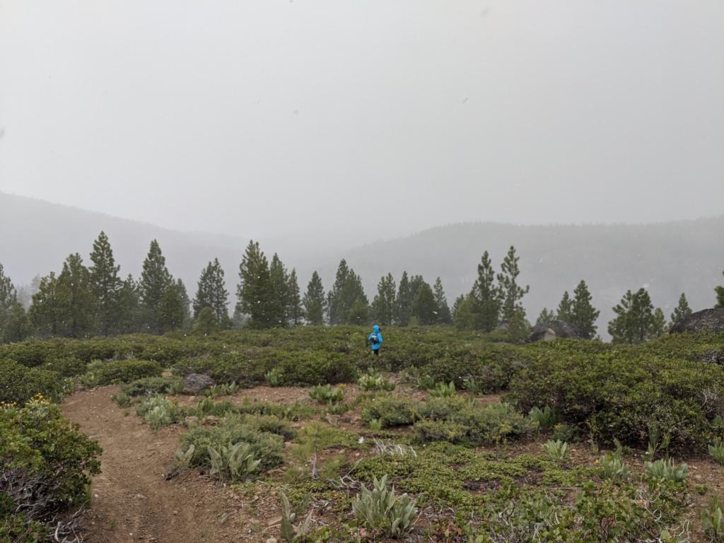 Journal: Sunday, June 7, 2020 // Partial Castle Peak Loop 119